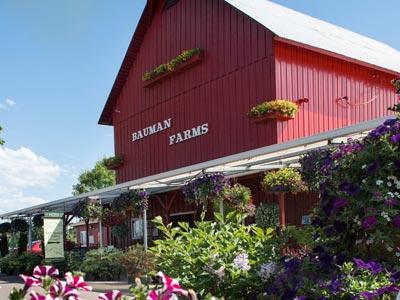 Bauman Farms provides Oregon Valley Farm beef in Gervais, Oregon